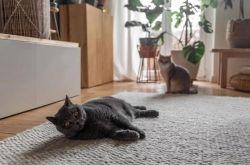 养宠物的家庭装修需要注意些什么