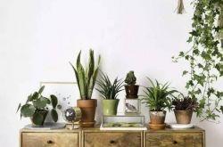 小户型怎能少了绿植 小户型家居设计