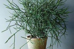 东莞家庭养殖绿植讲究因地制宜