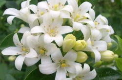 家里千万不能养的6种花,一定要知道!